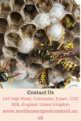 Do you need wasp nest removal in Colchester? | Contact 01206700644