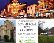 Contact 07487351351 |  Commercial Pest Control Essex + North Essex Pest Control